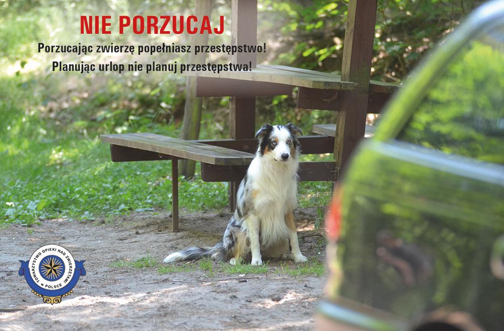 """""""Nie porzucaj"""" – kampania Towarzystwa Opieki nad Zwierzętami"""